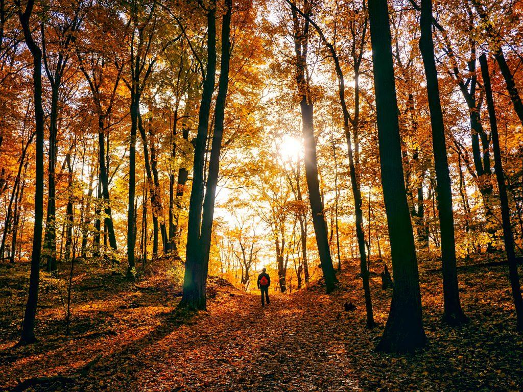 autumn-1812180_1280
