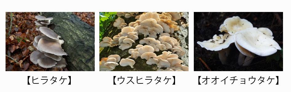 61_5_20170819
