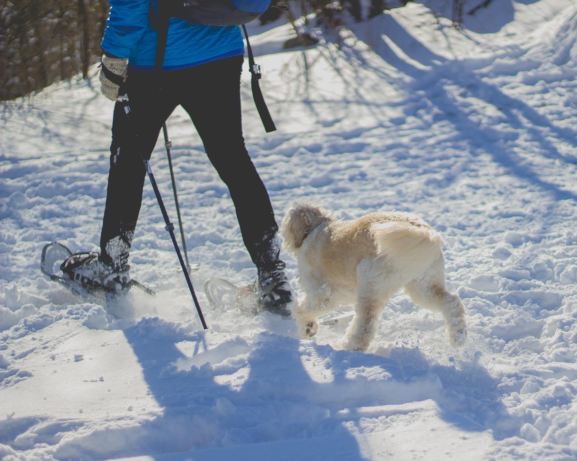 ふるさと兵庫100山のひとつ「東山」 冬はスノーシューハイクで人気